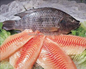 Fujian Factory Frozen Whole & round fish Tilapia from China