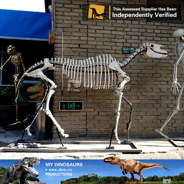 MY Dino-Fiberglass life-size dinosaur skeleton animal replicas