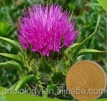 Free sample Milk Thistle Extract powder Milk Thistle Extract/powder silybum marianum milk thistle seed extract powder