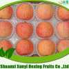 reliable high quality fuji apple import from china
