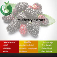 GMP Certified Mullberry Mulberry Extract/Mulberries Fruit Extract