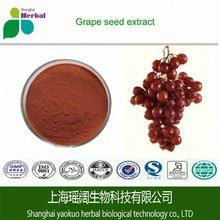 ISO certificate Manufacture Grape seed extract/Polyphenols