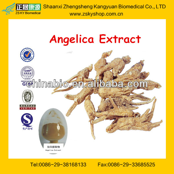 Hot Selling Dong Quai Extract 1% Ligustilide