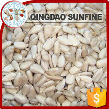 American type bulk sunflower seed