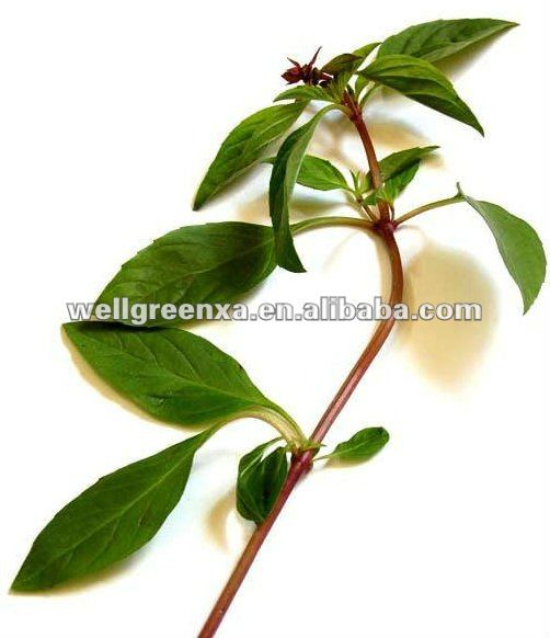 top quality Holy Basil extract
