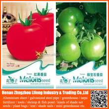 Best tomato seeds red price , f1 hybrid tomato seeds , high yield tomato seeds israel