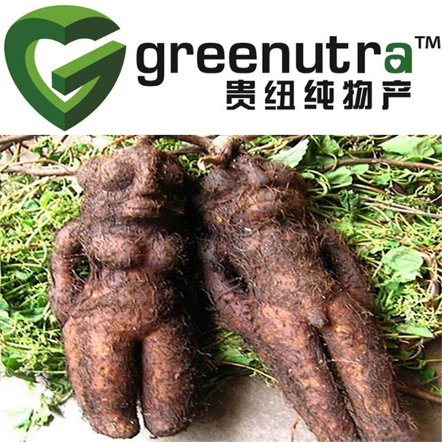 polygonum multiflorum plant extract