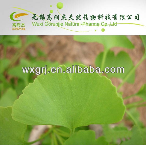 Hot sale bilobalide Ginkgo biloba extract with low price ON SELL