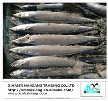 New Coming Frozen Pacific Saury for sale