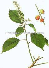 Top Quality Croton Fruit Extract Powder