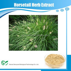 Wholesale price natural horsetail herb extract, Shavegrass extract