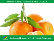 Chinese Fresh Mandarin Citrus fruits mandarin orange with Own Orchard and Factory