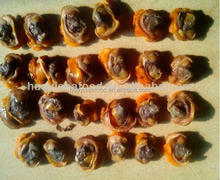 Factory price no pesticide residue delicious and superior frozen blood clam
