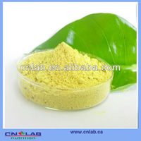GMP NSF ISO Certified Pure Natural Rutin Powder, Rutoside ,Rutinum(Sophora japonica flower extract Rutin)