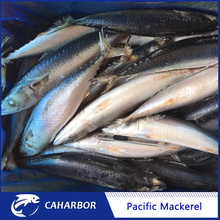 2017 New frozen pacific mackerel IQF seafrozen mackerel