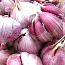 2017 Best Price Fresh New Garlic