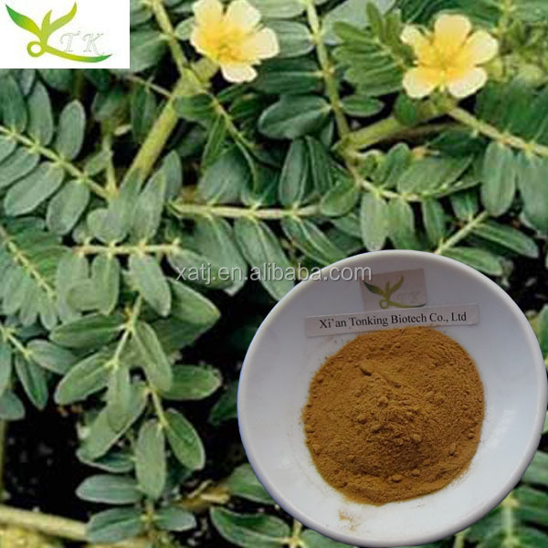 Chinese herb medicine for man Tribulus terrestris extract