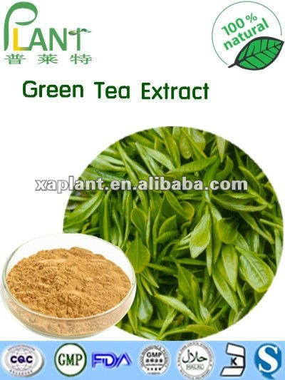 GMP Manufacturer High quality L-Theanine 98% Green Tea Extract