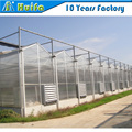 High light transmission hollow polycarbonate greenhouse