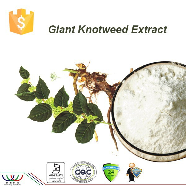 Free sample China supplier wholesale herb medicine resveratrol bulk powder giant knotweed extract resveratrol manufacturers