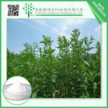 Factory supply low price Stevia Leaf Extract Rebaudioside A 95% from China supply
