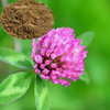 China Hong Che Zhou Trifolium pratense Red Clover Extract