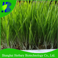 Wholesale wheat grass seeds with good quality and low price