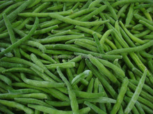 IQF frozen green beans wholesale green beans whole cut 2016 new price