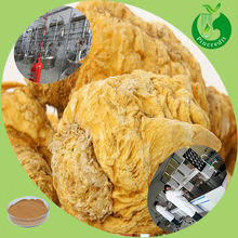 100% Natural at Competitive Price of Maca Extract