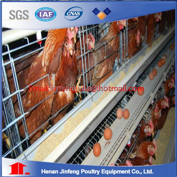 Alibaba China supplier poultry layer chicken cage for sale /3 tiers A type automatic chicken cage for Africa market (Factory)