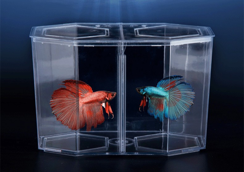 List manufacturers of bettas for sale buy bettas for sale for Cheap betta fish tanks