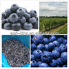Freeze Blueberry Fruit And Vegetable Prices