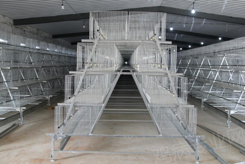 series hot sale layer egg chicken cage/poultry farm cage system