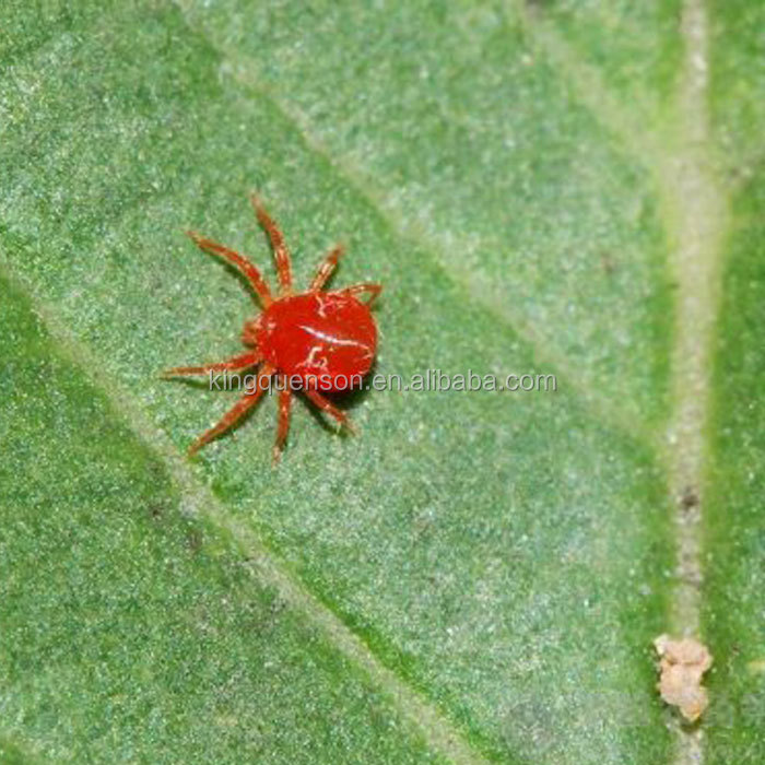 Taktic Amitraz CAS:33089-61-1High Effective kill Cotton Red Spider