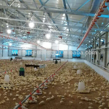 poultry house/chicken shed/broiler farm construction and building