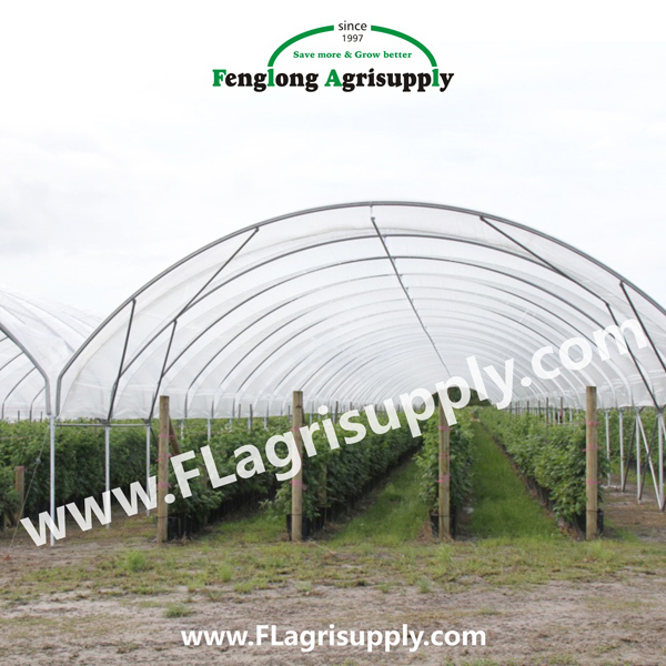 Multispan Tunnel Greenhouse For Strawberry Grape