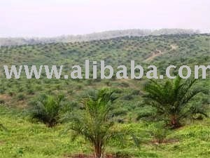 Palm Oil Plantation and Mills for Sale 20,000 hectares area in West Kalimantan Province Indonesia