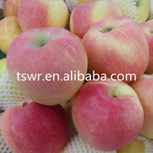 best sale qinguan big size and red apple