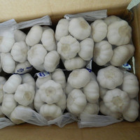 fresh garlic for Australia & best price