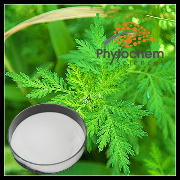 Buy artemisnin anti cancer Artemisia annua powder