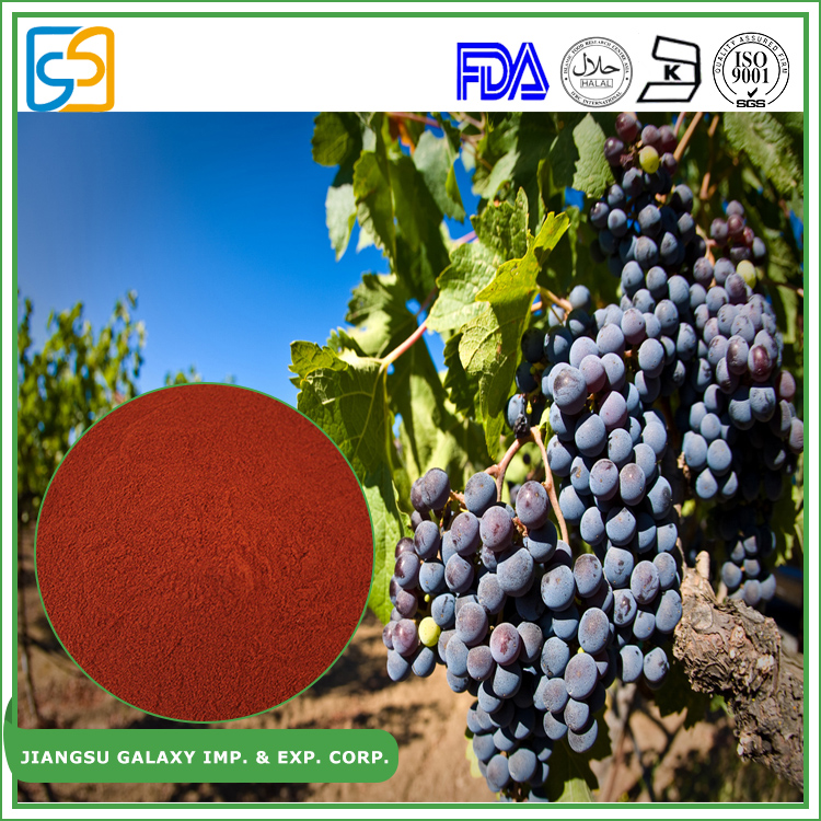 China supplier polyphenol 80% / proanthocyanidin 95% extract grape seed powder