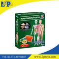 Interesting educationalhuman anatomy projector toy for kids