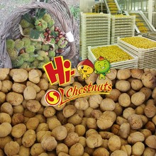 IQF Chestnuts, Frozen Peeled Chestnut for sale