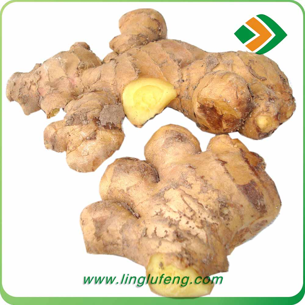 2016 World Best Selling Wholesale Fresh air dry Ginger Buyers