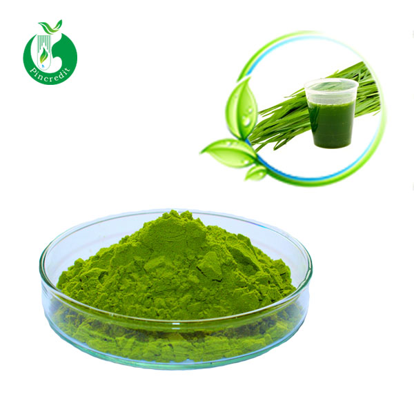 barley grass juice powder/Natural Barley Grass P.E/young barley grass powder