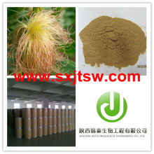 zea mays extract powder