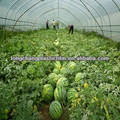 Metallocene Greenhouse Film ,Specialize For Watermelon
