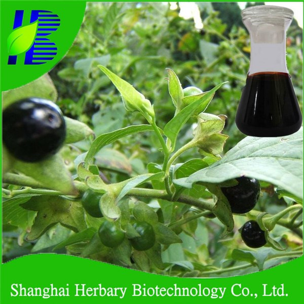 Top quality plant extract belladonna liquid extract