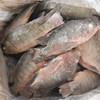 Seafood florida tilapia with best price