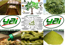 Moringa Oleifera Dry Leaf Supplier in Dubai / US / UK / Singapore / Malaysia